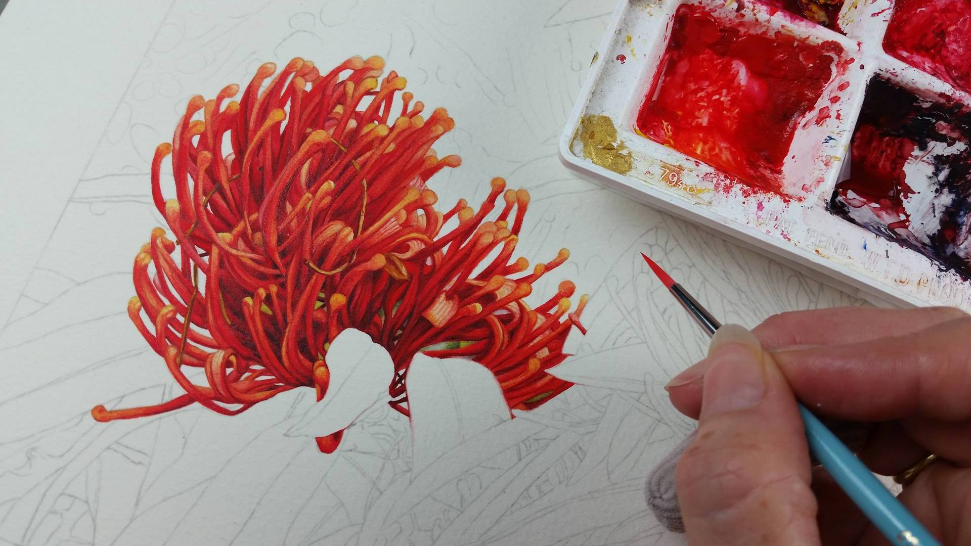 Heidi Willis_Botanical artist_Australian