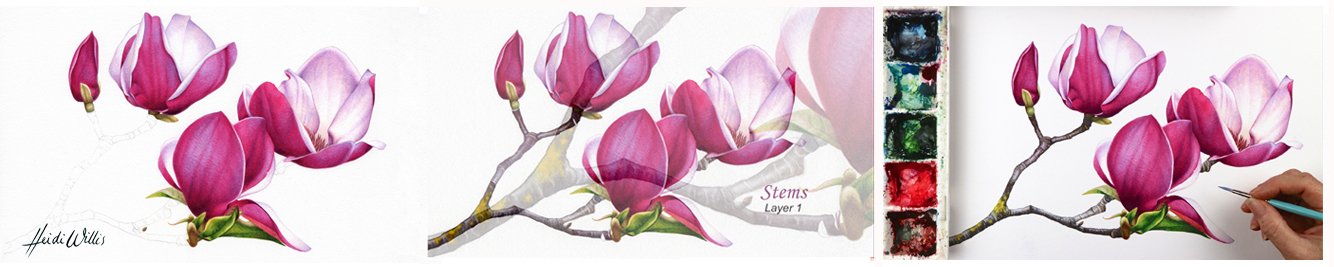 Heidi-Willis_Online-watercolour_botanical-painting_tutorials-1 copy