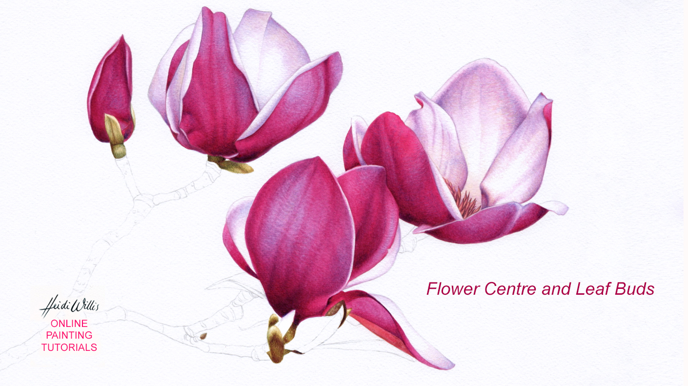 Heidi Willis_online watercolour_botanical painting_tutorial
