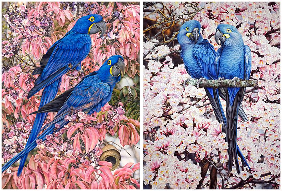 Macaw painting_heidi willis_artist_bird illustration_watercolour_parrots