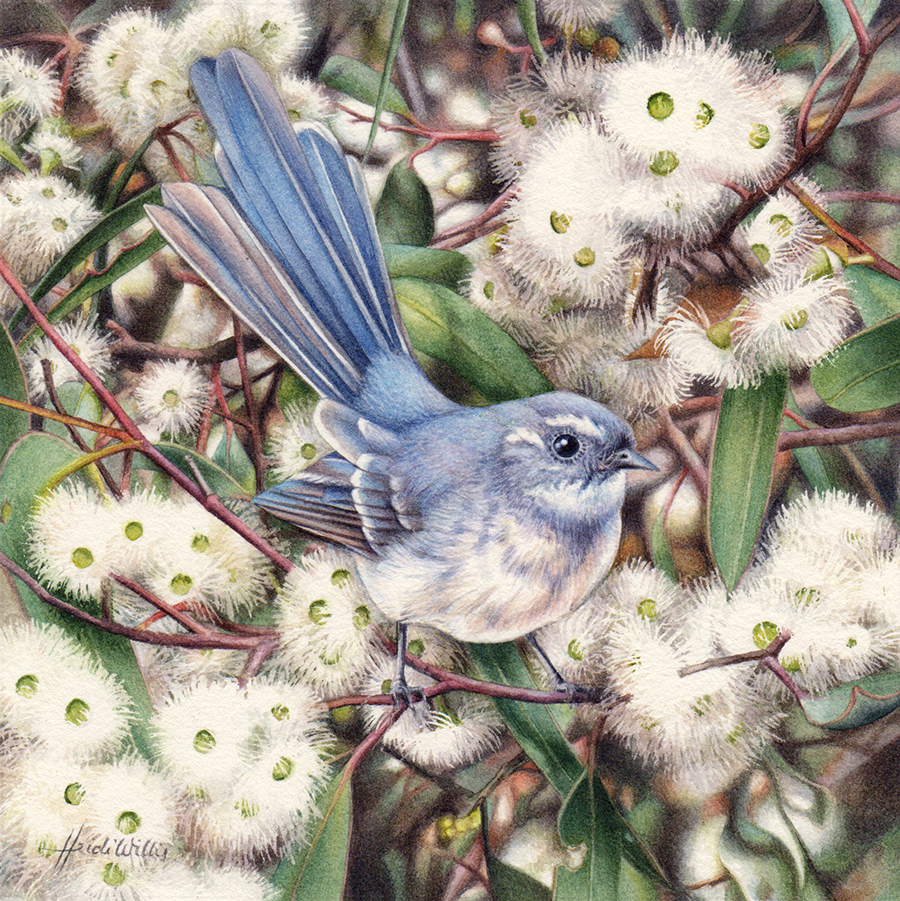artist_heidi willis_australian bird painting_fantail_gum blossom