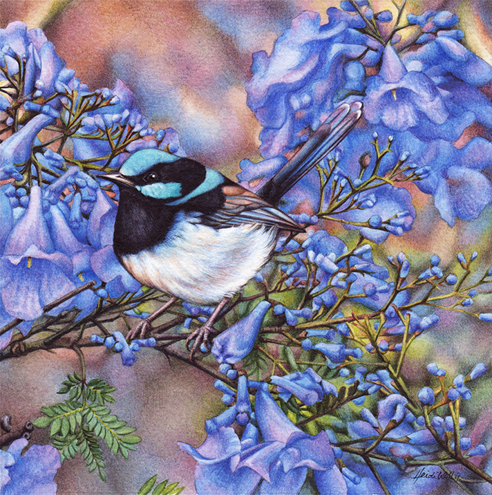 bird painting_heidi willis_blue wren_jacaranda_watercolour