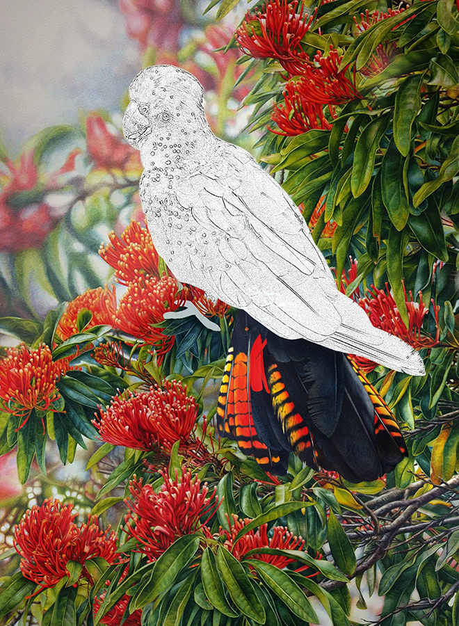 black cockatoo_Bird painting_watercolour_Heidi Willis