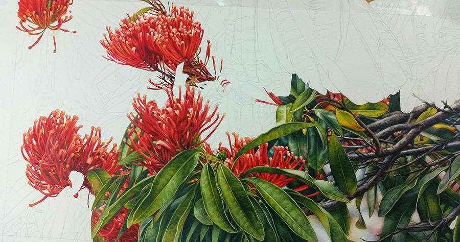 heidi willis_Botanical painting_watercolour_Tree waratah