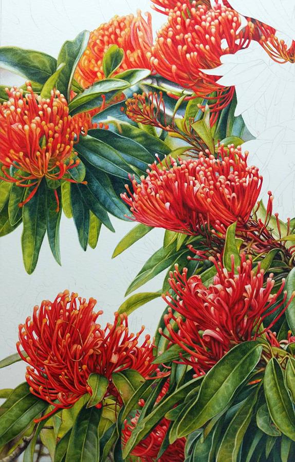 heidi willis_Tree waratah_Watercolour_botanical painting