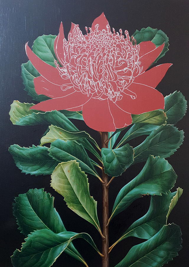 heidi willis_artist_botanical illustration_waratah painting