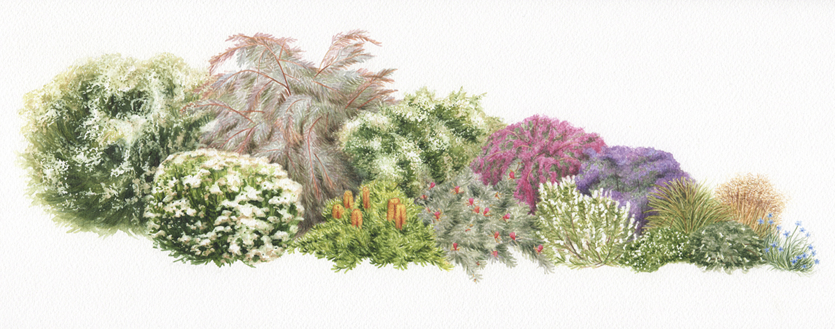 heidi willis_artist_botanical illustrator_plants painting