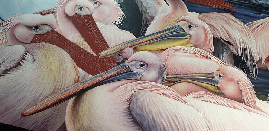 heidi willis_artist_illustrator_pelican painting_acrylics bird art