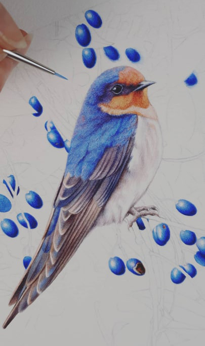 heidi willis_bird painting_artist_illustrator_bird painting_welcome swallow_watercolour