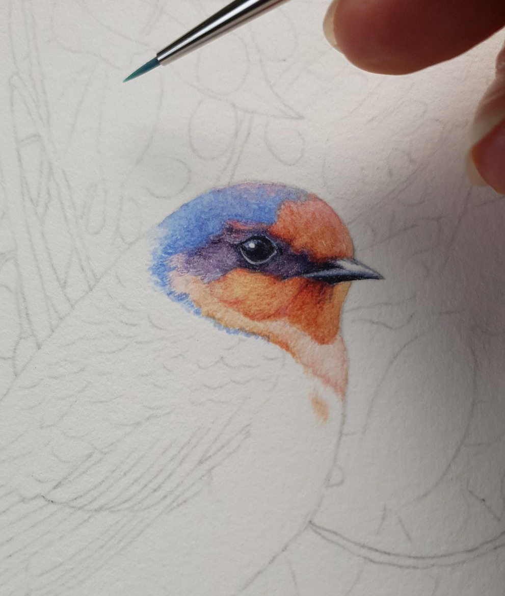 heidi willis_bird painting_artist_swallow_watercolour