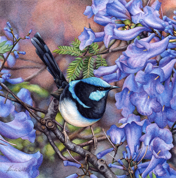 heidi willis_bird painting_blue wren_watercolour_jacaranda