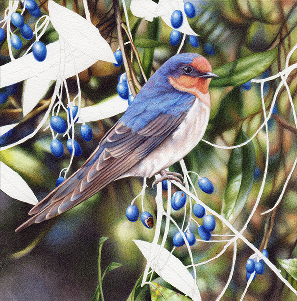 heidi willis_bird painting_welcome swallow_watercolour_artist_blueberry ash