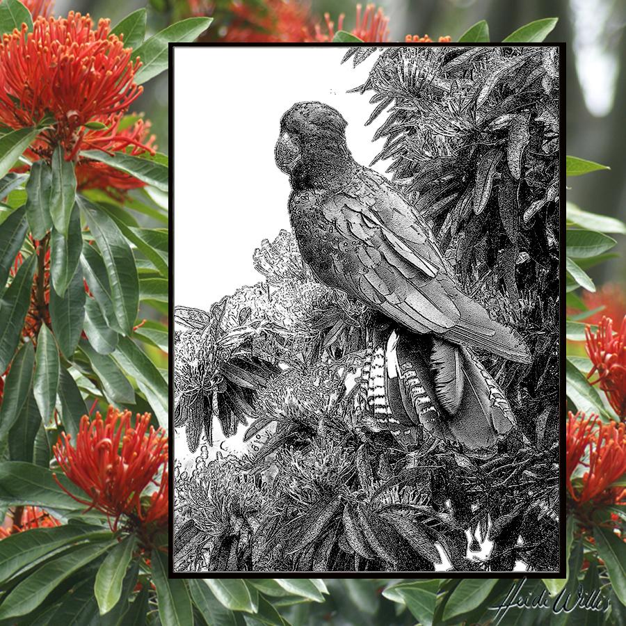 heidi willis_black cockatoo_bird painting