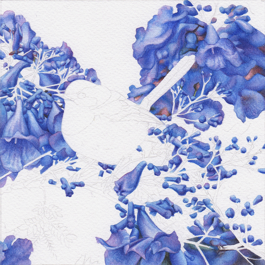 heidi willis_blue wren_jacaranda painting_watercolour