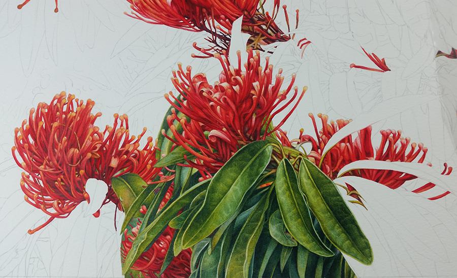heidi willis_botanical artist_Tree waratah_painting_watercolour