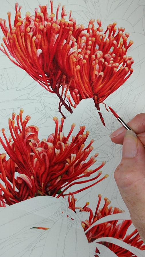 heidi willis_botanical artist_australian tree waratah
