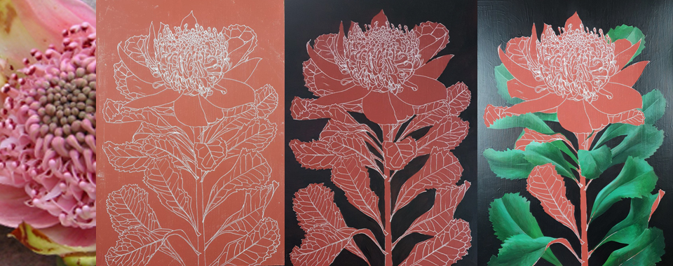 heidi willis_botanical artist_natural history_waratah painting