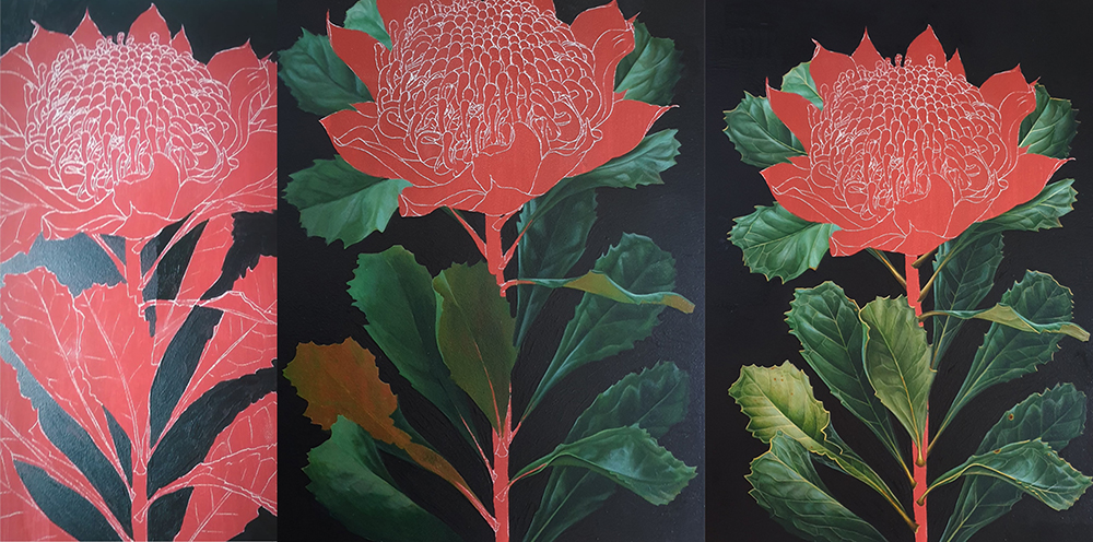 heidi willis_botanical artist_waratah painting_illustration