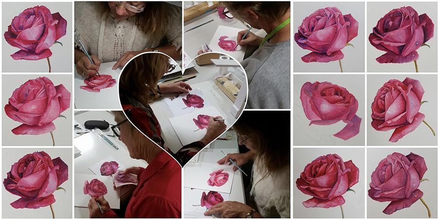 heidi willis_botanical painting_class_teacher_watercolour