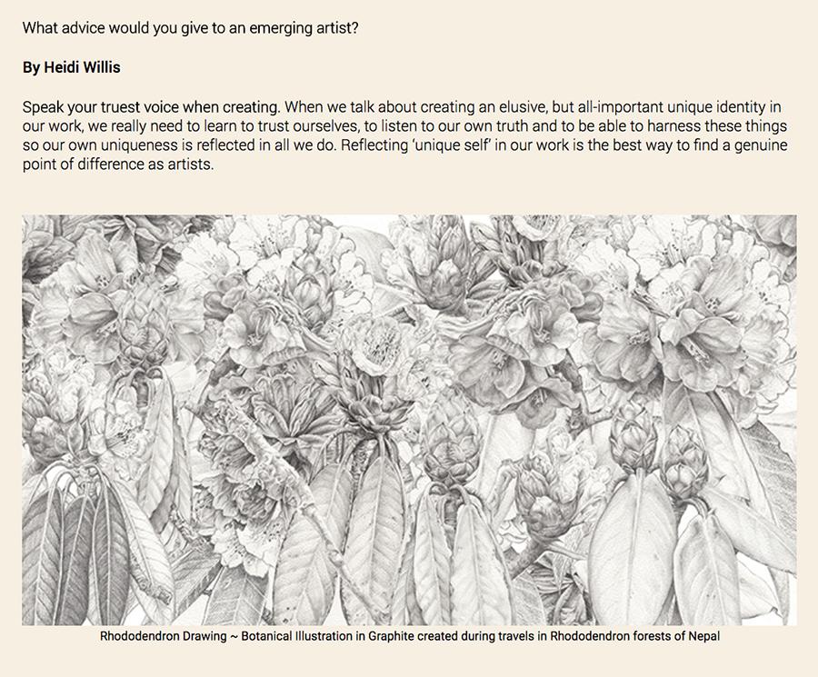 heidi willis_emerging natural history artists_advice_jacksons art