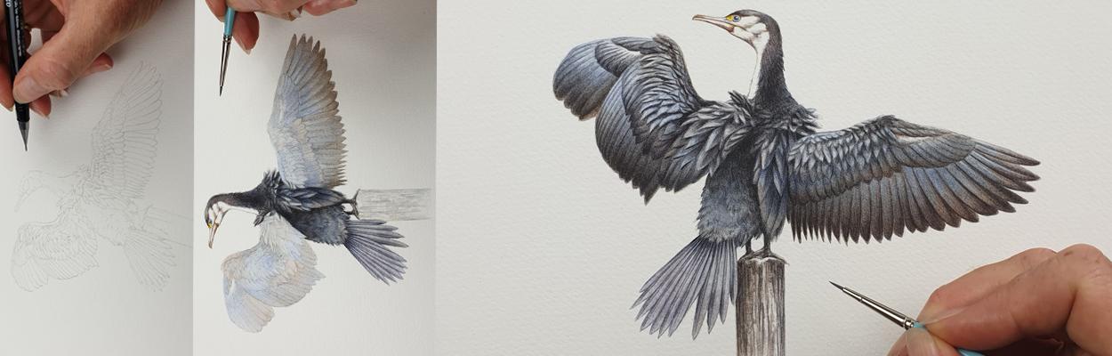 heidi willis_illustrator_artist_bird_cormorant_sydney parks