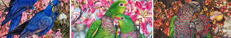 heidi willis_natural history artist_painting_parrots