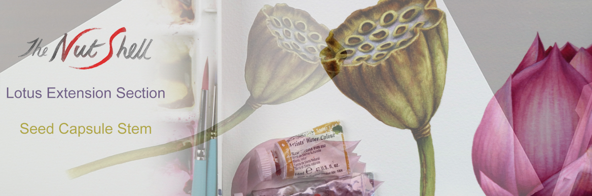 heidi willis_online painting tutorial_botanical_lotus_watercolour