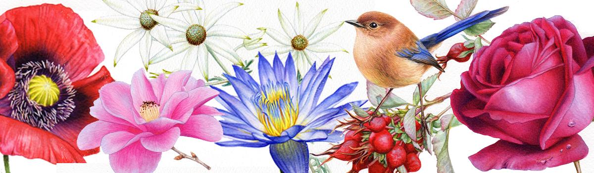 heidi willis_watercolour botanical paintings
