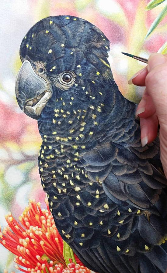 heidi willis_watercolour_bird painting_black cockatoo