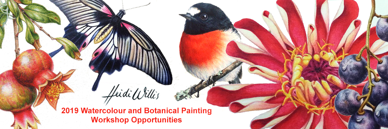 heidi willis_watercolour_botanical_painting class_workshops