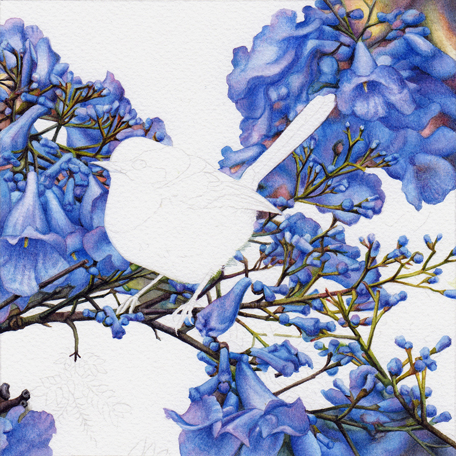 heidi willis_watercolour_jacaranda painting_wren