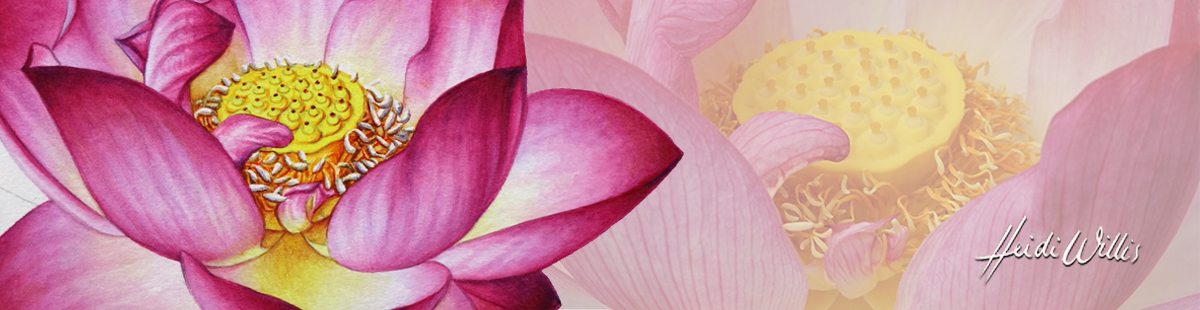 lotus_heidi-willis_online-painting-tutorial_watercolour_botanical