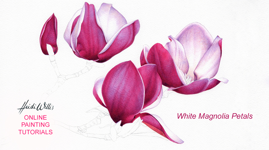 online painting tutorial_magnolia_botanical_watercolor_heidi willis