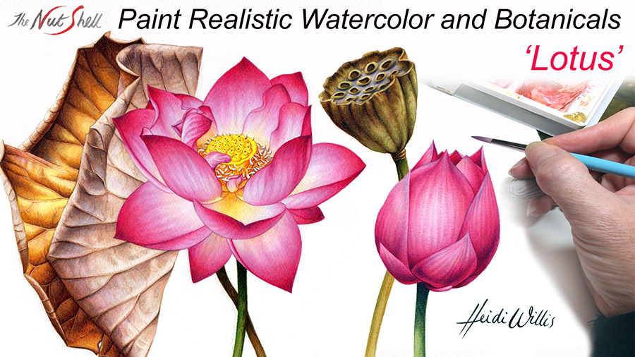 website_Heidi Willis_Online Painting Tutorial_Lotus_watercolour_watercolor