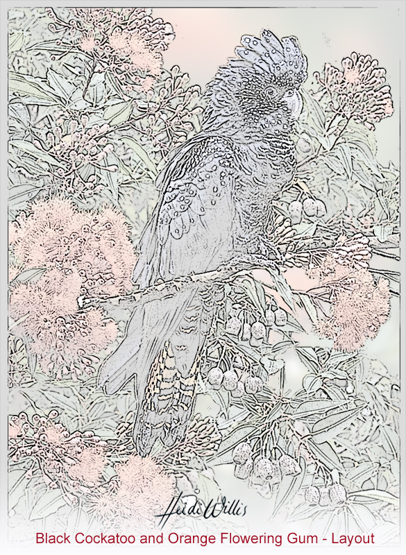 heidi willis_black cockatoo_artist