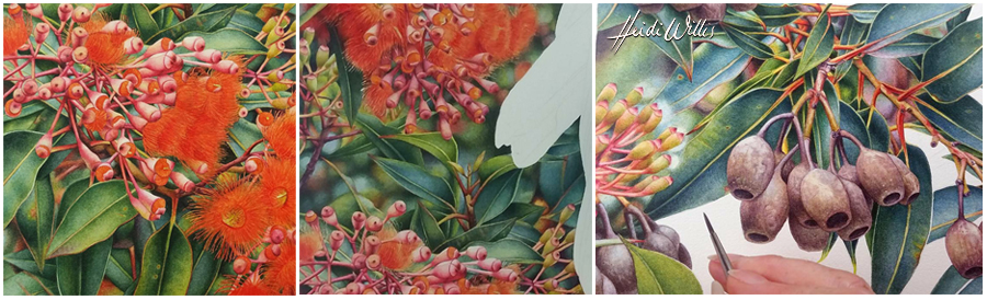 heidi willis_flowering gum_painting_botanical copy