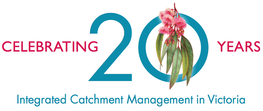 heidi willis_Illustration_eucalyptus_Victorian catchement management