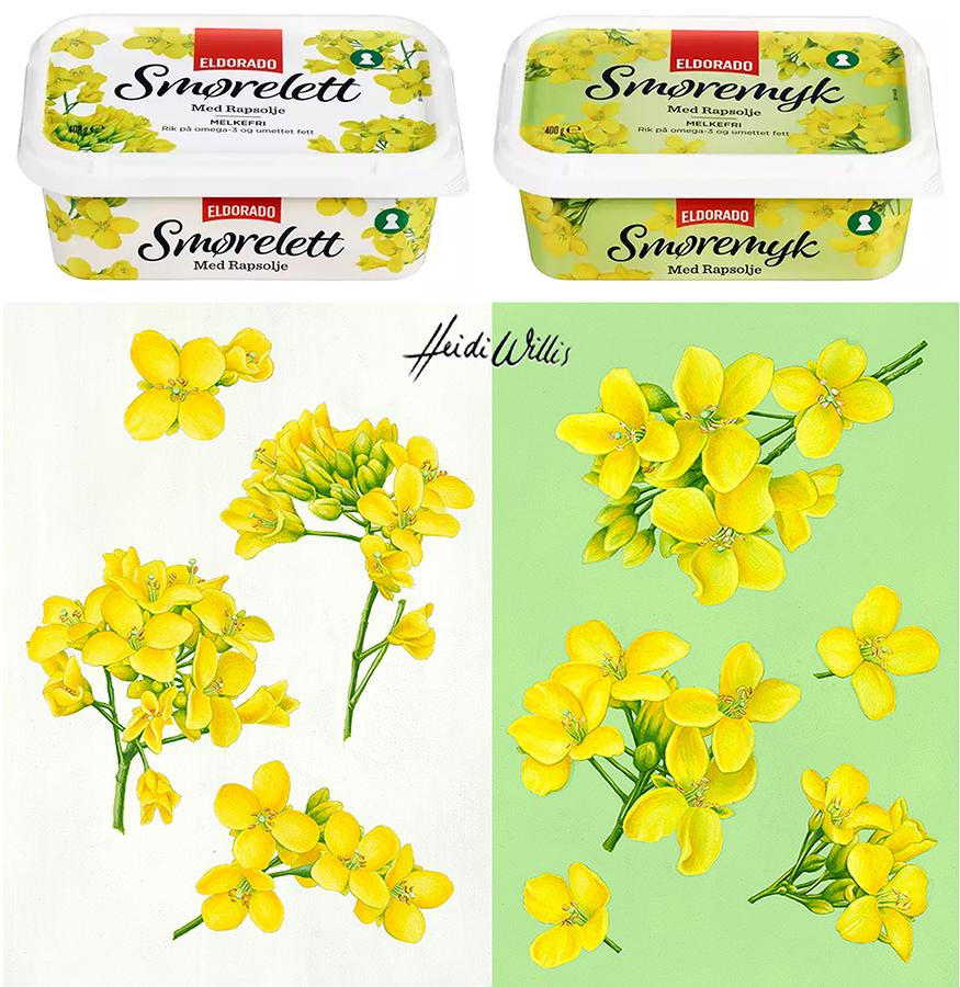 heidi willis_illustration_food_packaging_canola_fruit_botanical artist_eldorado